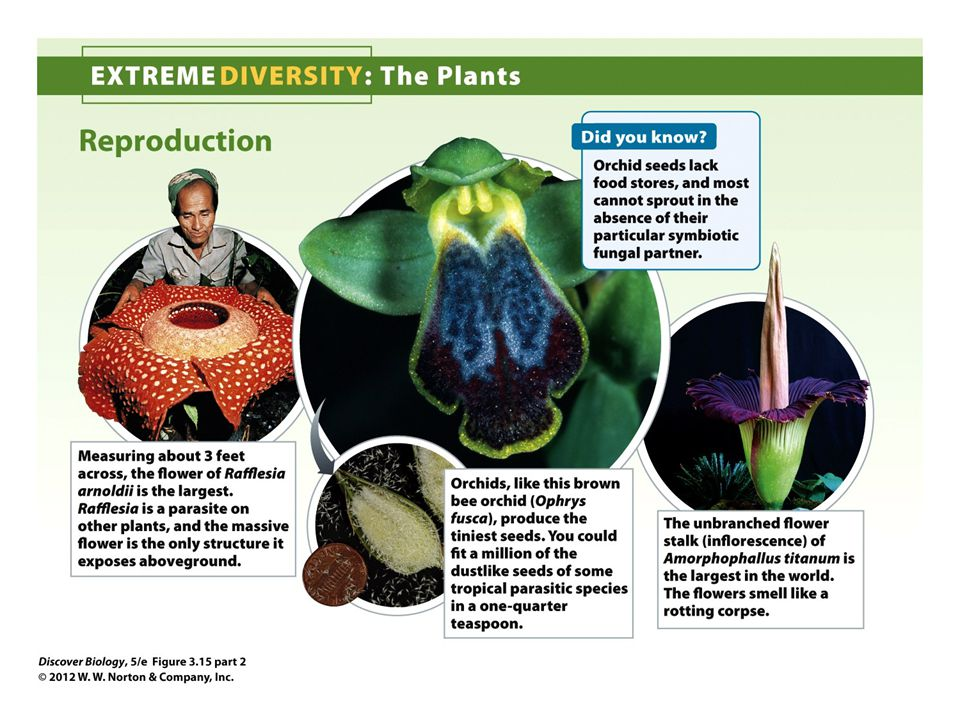 Figure 3.15 Extreme Diversity: The Plants