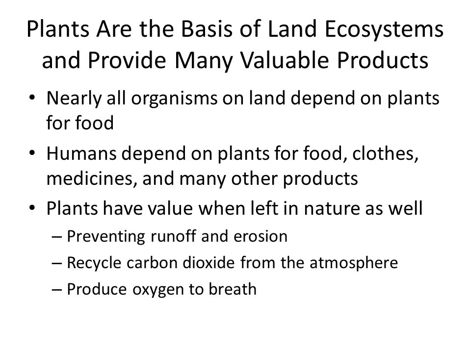 Plants Are the Basis of Land Ecosystems and Provide Many Valuable Products