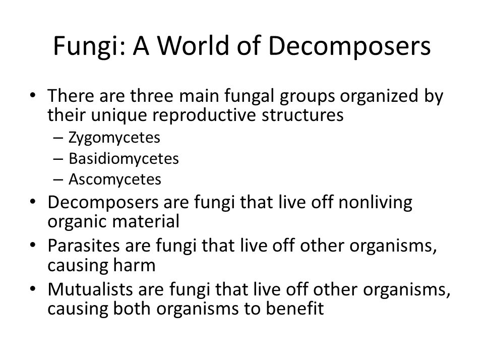 Fungi: A World of Decomposers
