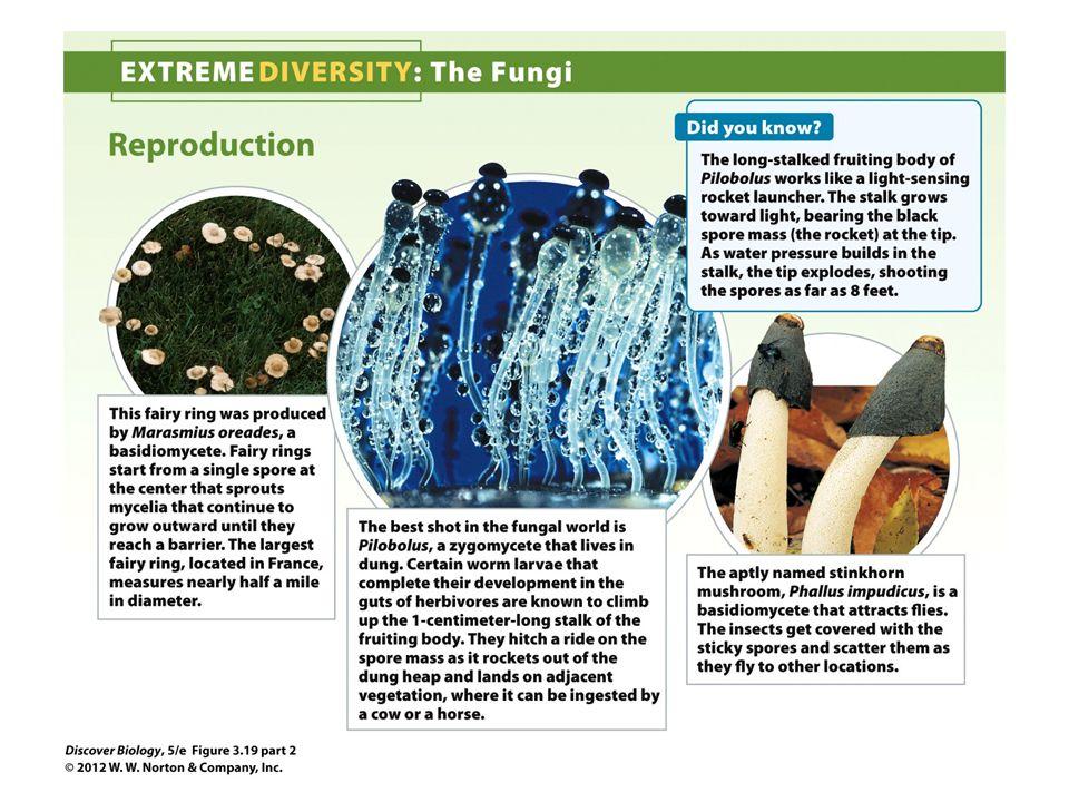 Figure 3.19 Extreme Diversity: The Fungi