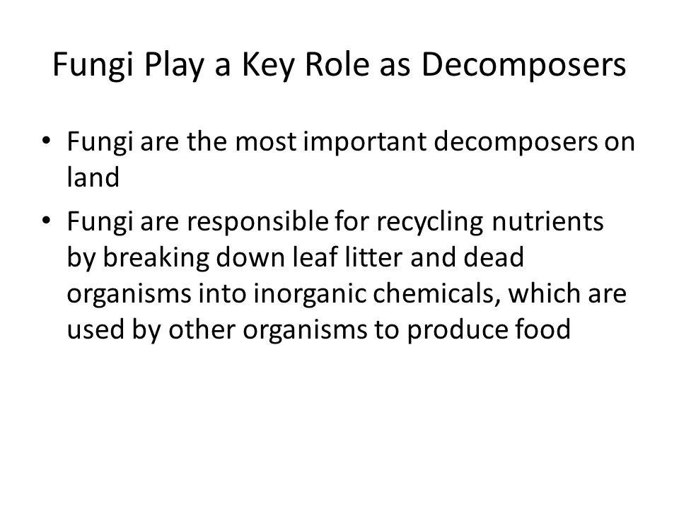 Fungi Play a Key Role as Decomposers