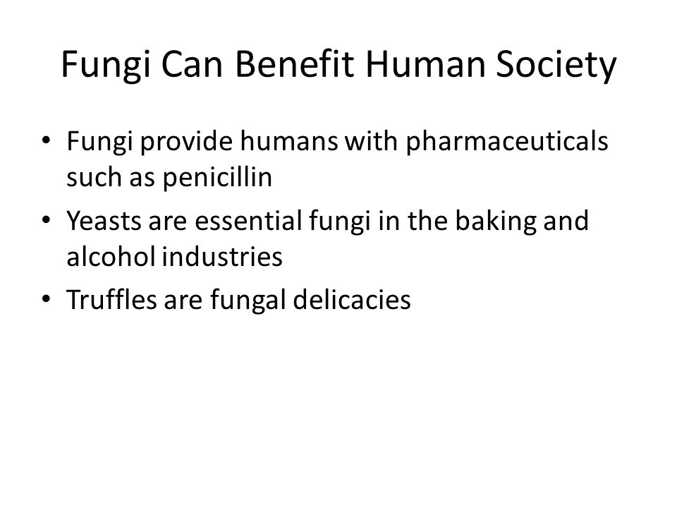 Fungi Can Benefit Human Society