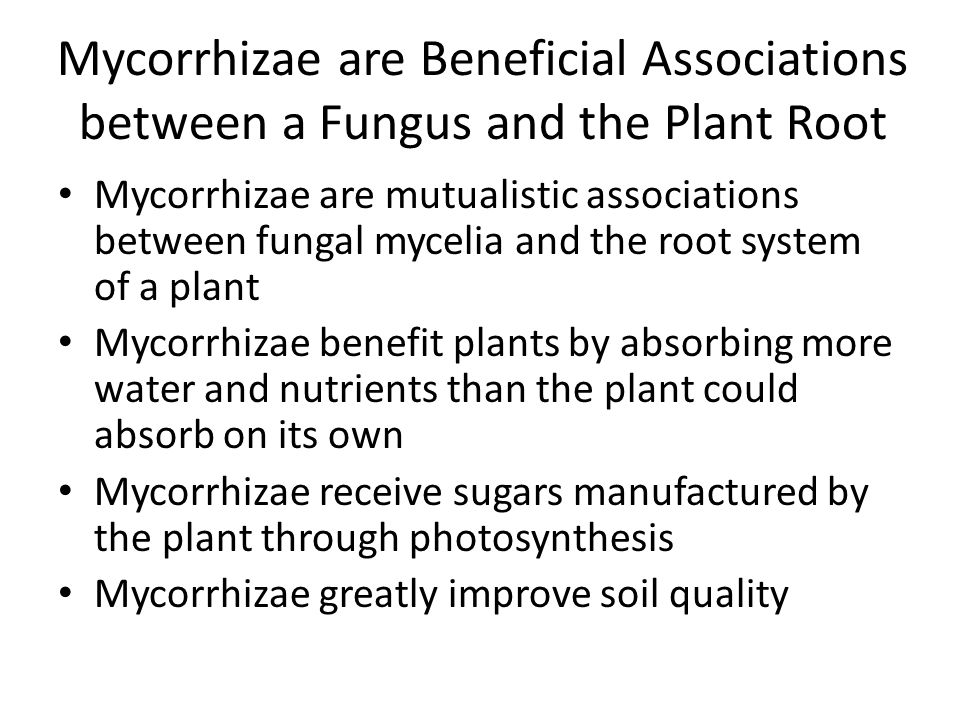 Mycorrhizae are Beneficial Associations between a Fungus and the Plant Root