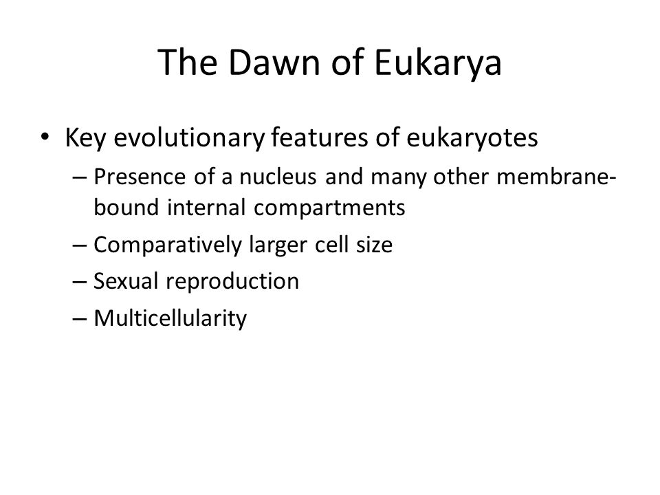 The Dawn of Eukarya Key evolutionary features of eukaryotes