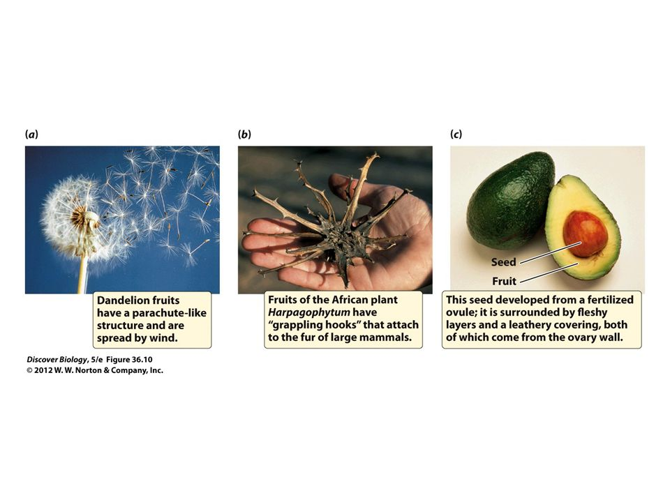 Figure 36.10 Plants Produce a Vast Variety of Fruits