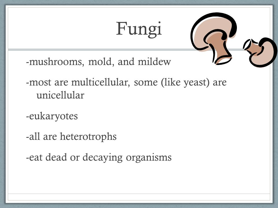 Fungi -mushrooms, mold, and mildew