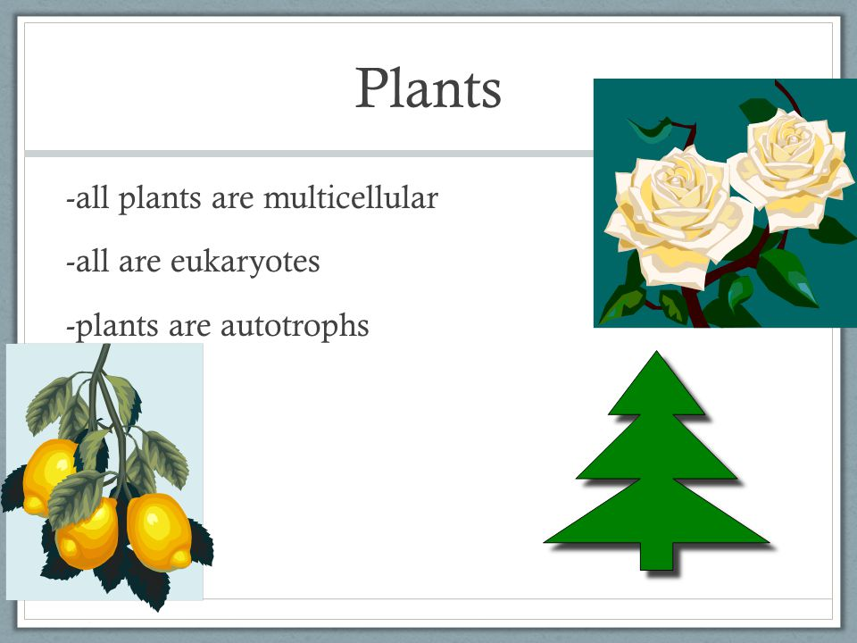 Plants -all plants are multicellular -all are eukaryotes