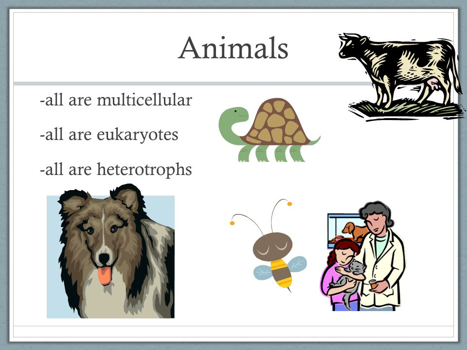 Animals -all are multicellular -all are eukaryotes