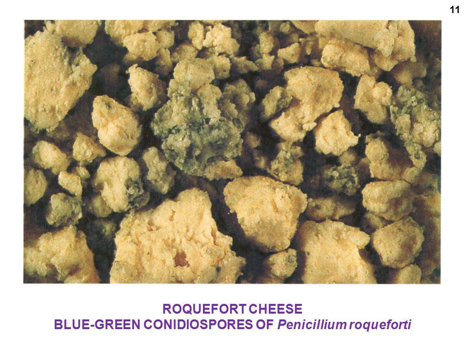 BLUE-GREEN CONIDIOSPORES OF Penicillium roqueforti