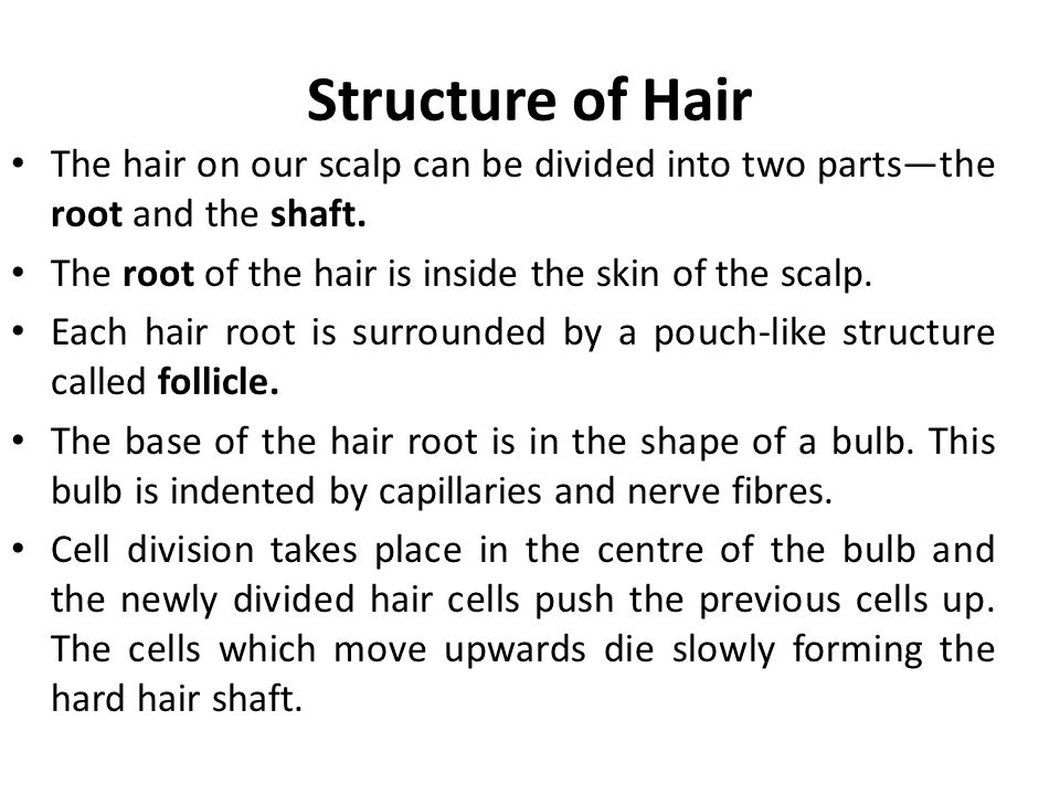 Structure of Hair The hair on our scalp can be divided into two parts—the root and the shaft. The root of the hair is inside the skin of the scalp.