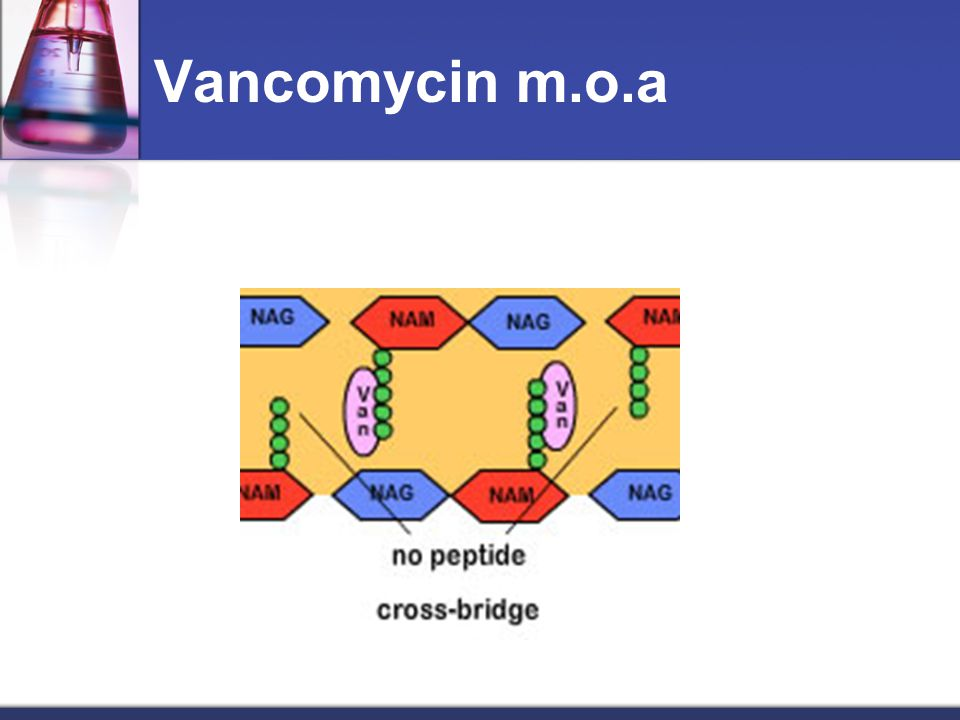 Vancomycin m.o.a Binds directly to pentapeptide