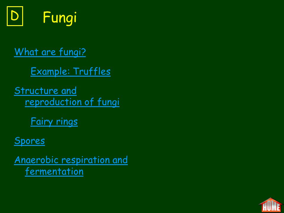 Fungi D What are fungi Example: Truffles