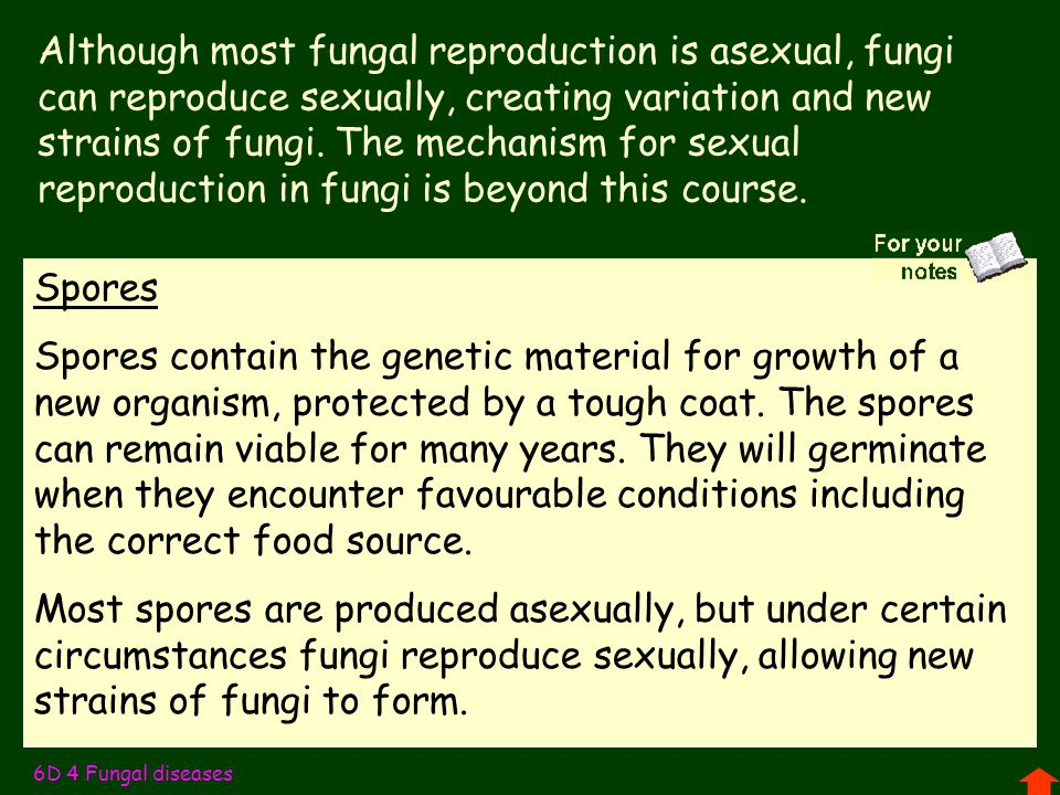 Although most fungal reproduction is asexual, fungi can reproduce sexually, creating variation and new strains of fungi. The mechanism for sexual reproduction in fungi is beyond this course.