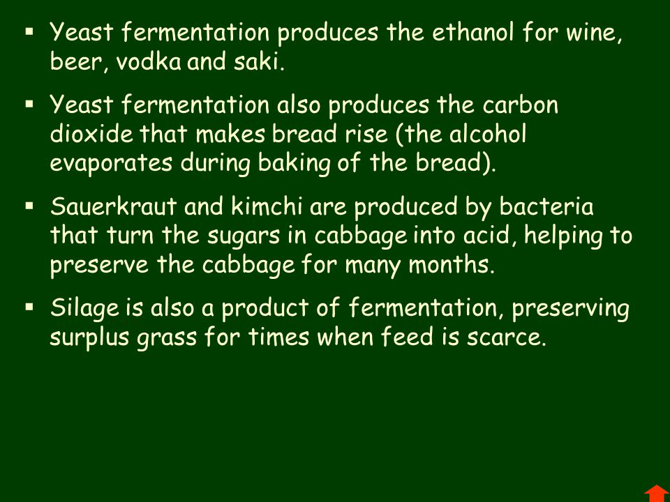 Yeast fermentation produces the ethanol for wine, beer, vodka and saki.