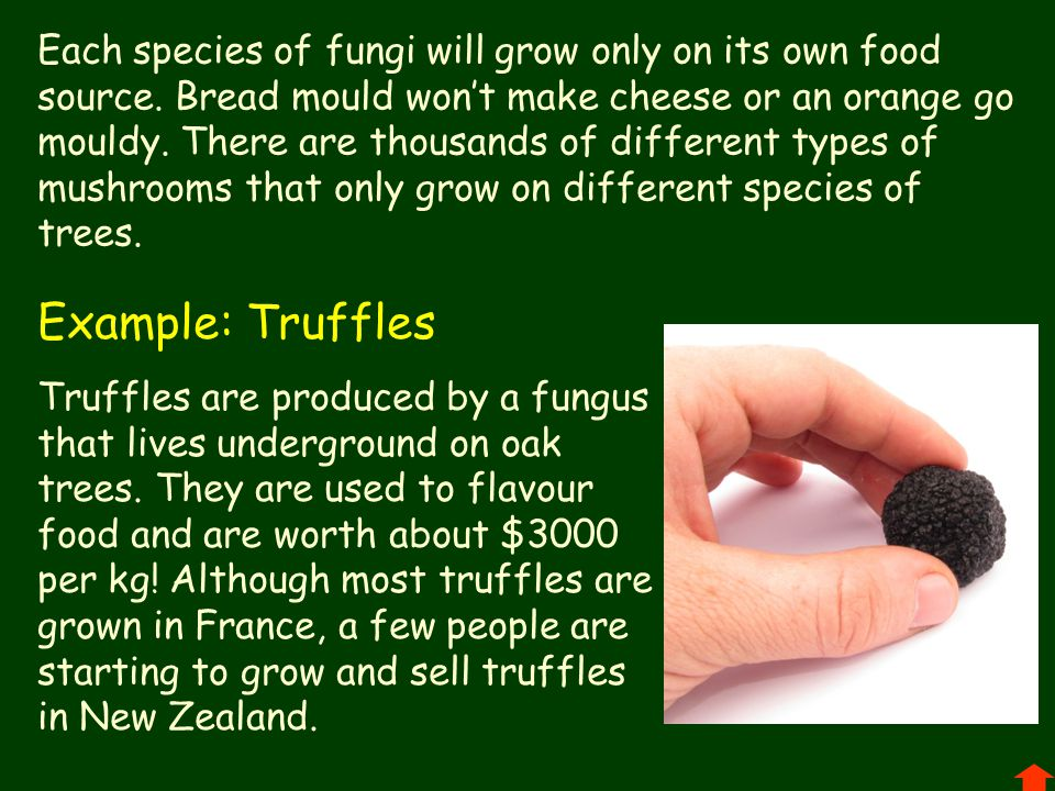 Each species of fungi will grow only on its own food source