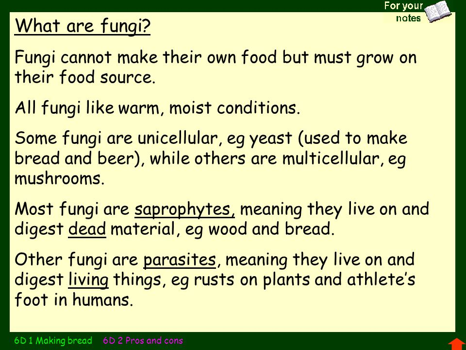 What are fungi Fungi cannot make their own food but must grow on their food source. All fungi like warm, moist conditions.