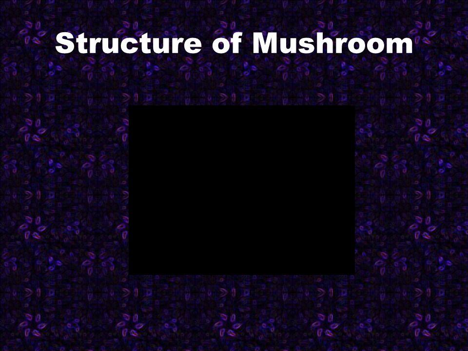 Structure of Mushroom