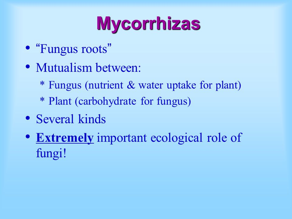 Mycorrhizas Fungus roots Mutualism between: Several kinds
