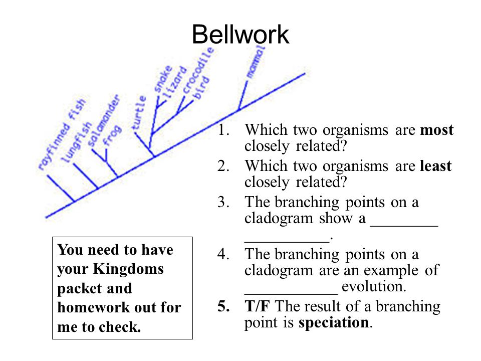 Bellwork Which two organisms are most closely related