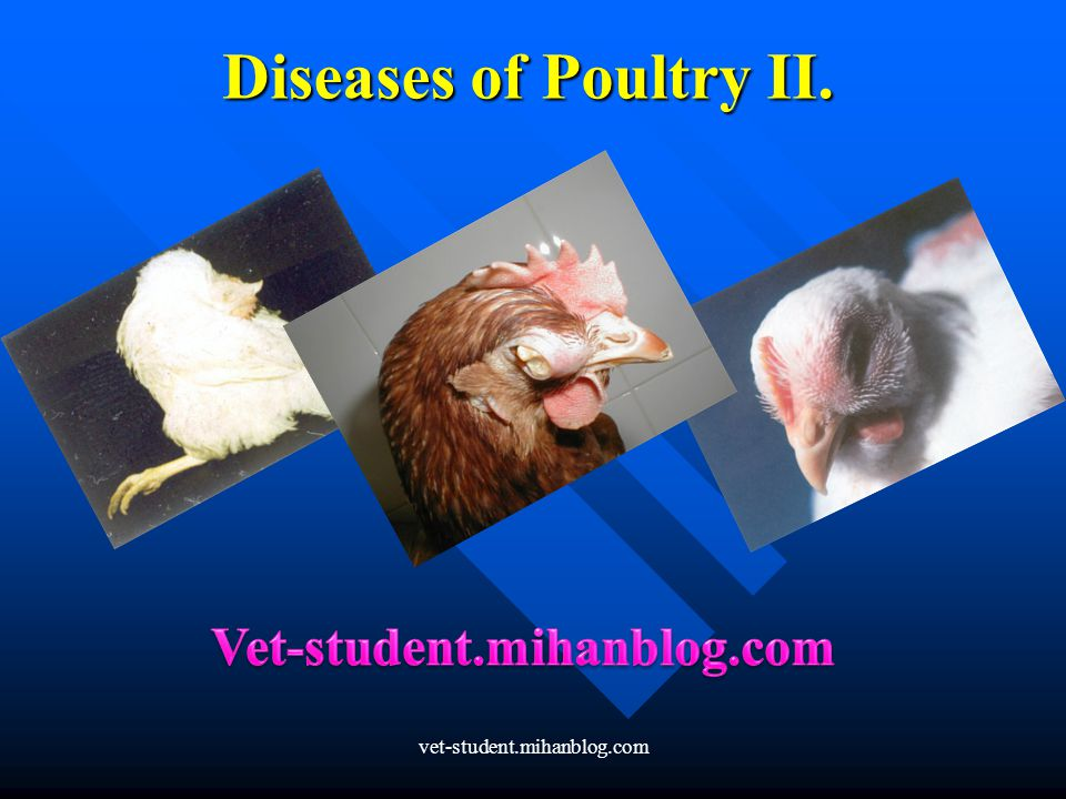 Diseases of Poultry II. Vet-student.mihanblog.com