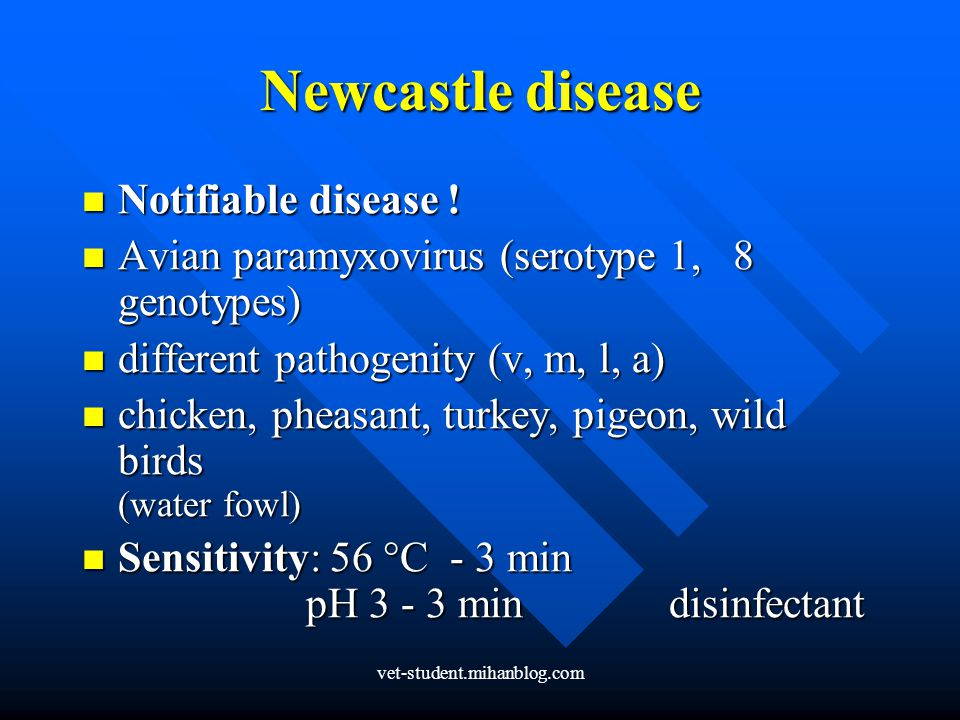 Newcastle disease Notifiable disease !
