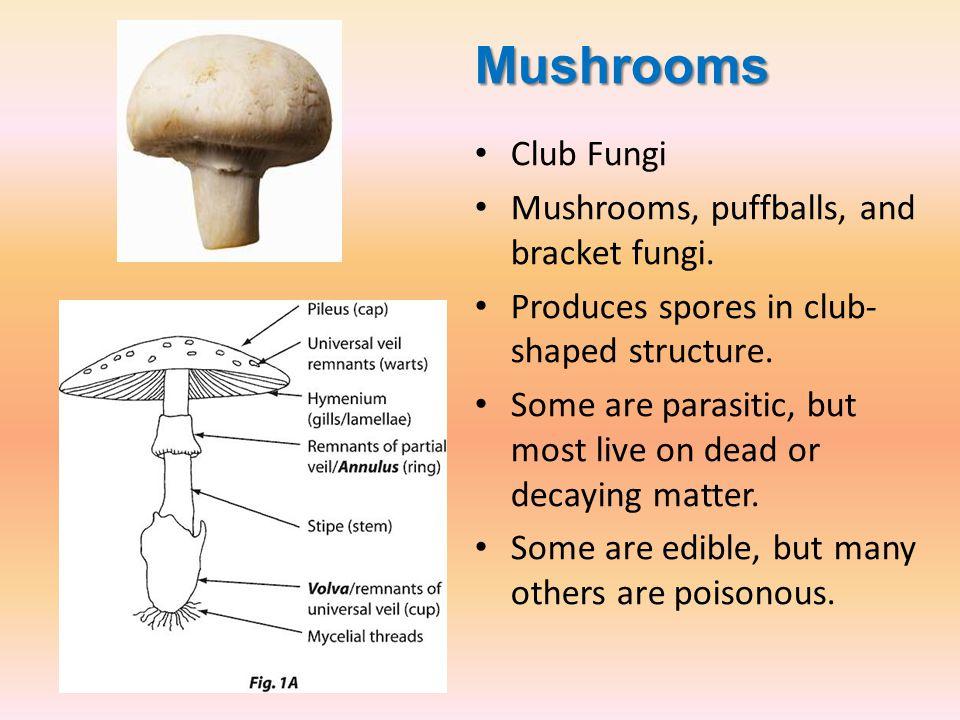 Mushrooms Club Fungi Mushrooms, puffballs, and bracket fungi.