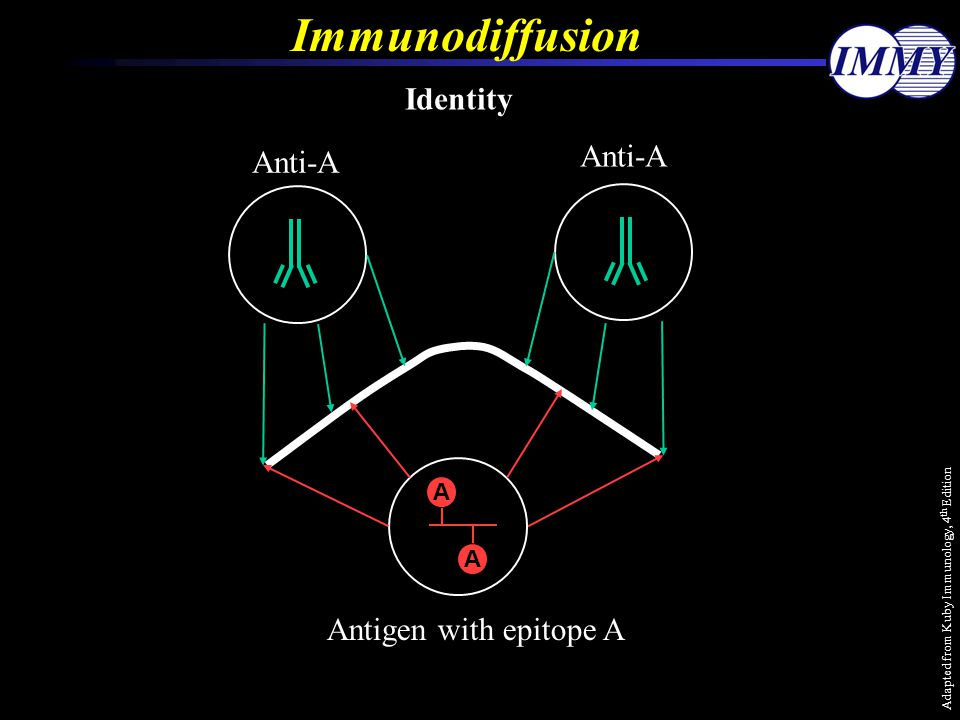 Immunodiffusion Identity Anti-A Antigen with epitope A A