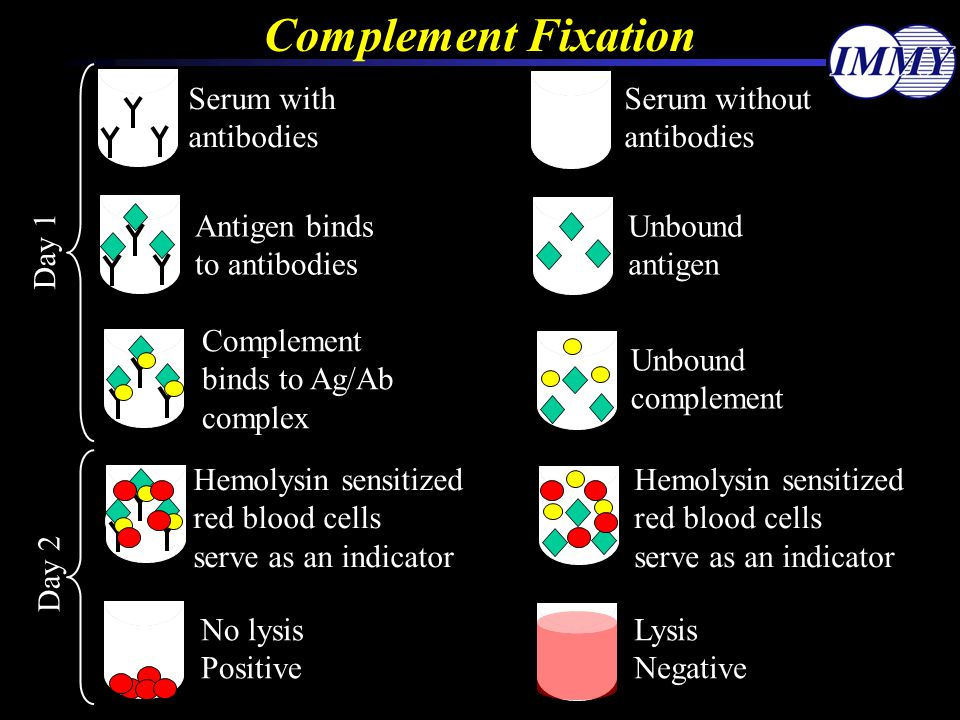 Complement Fixation Serum without antibodies Serum with Antigen binds