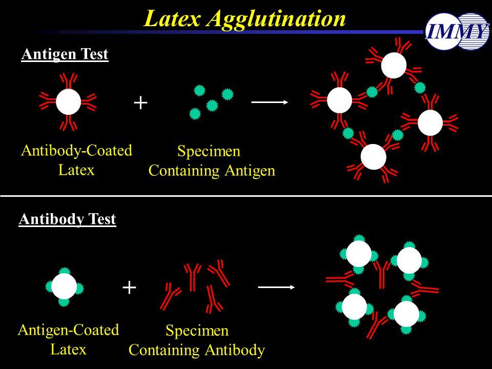 Latex Agglutination + + Antigen Test Antibody-Coated Specimen Latex