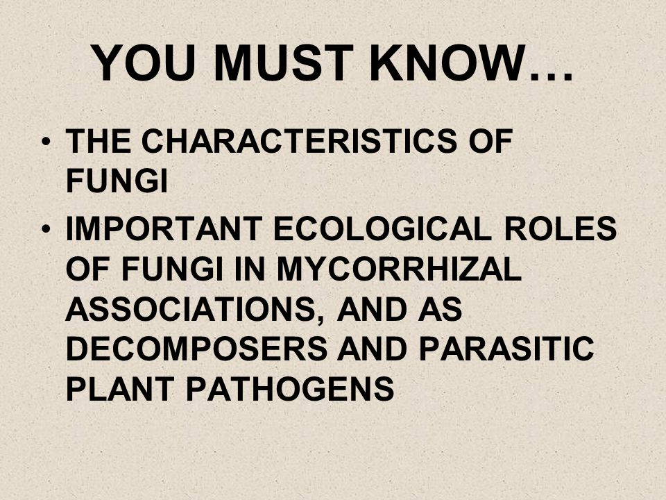 YOU MUST KNOW… THE CHARACTERISTICS OF FUNGI