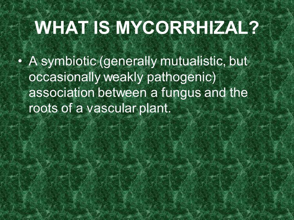 WHAT IS MYCORRHIZAL