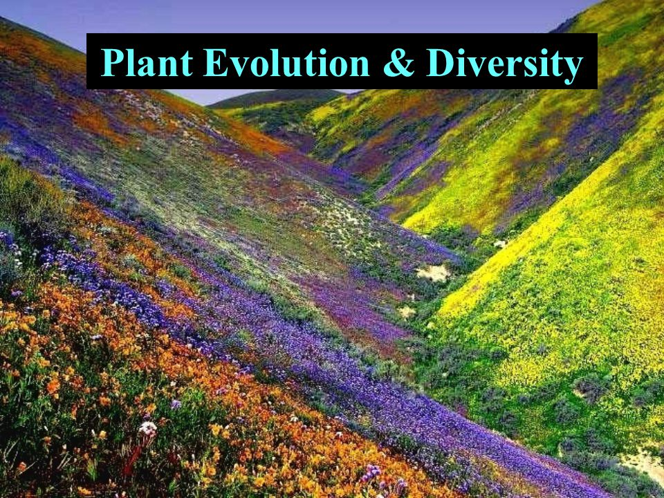 Plant Evolution & Diversity