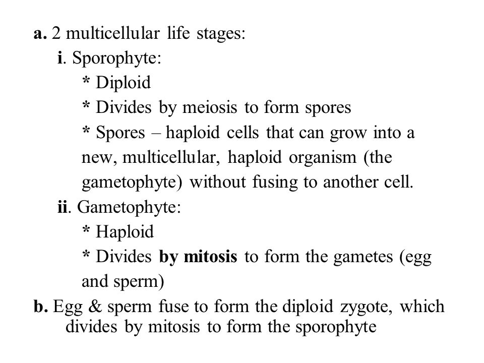 a. 2 multicellular life stages:
