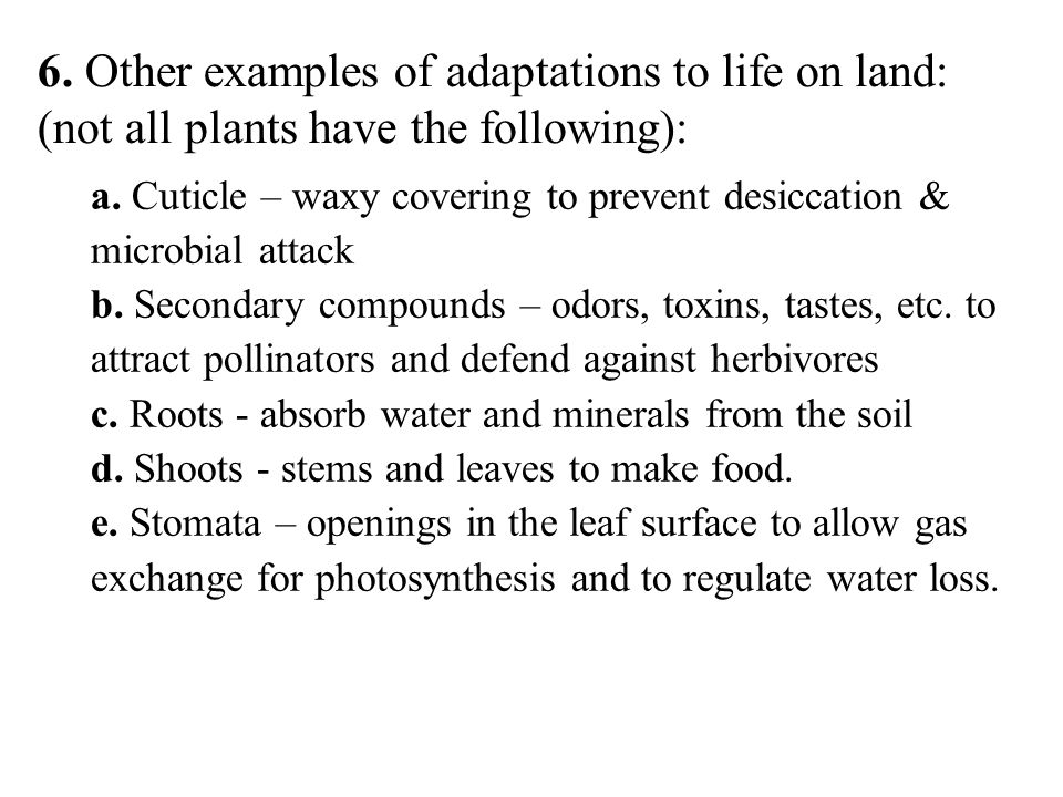 6. Other examples of adaptations to life on land: (not all plants have the following):