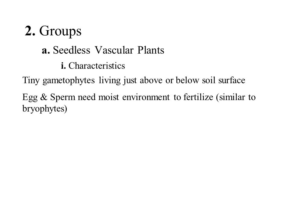 2. Groups a. Seedless Vascular Plants i. Characteristics