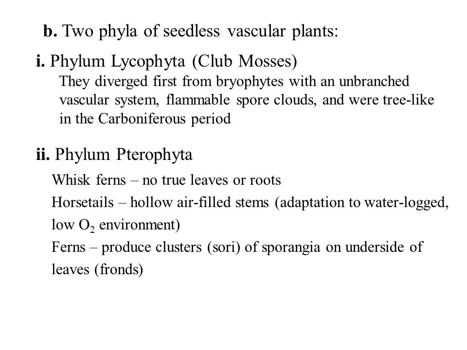 b. Two phyla of seedless vascular plants: