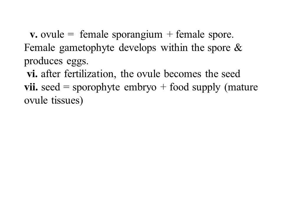v. ovule = female sporangium + female spore.