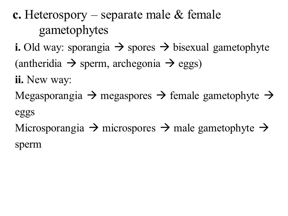 c. Heterospory – separate male & female gametophytes