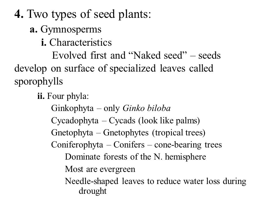 4. Two types of seed plants: a. Gymnosperms