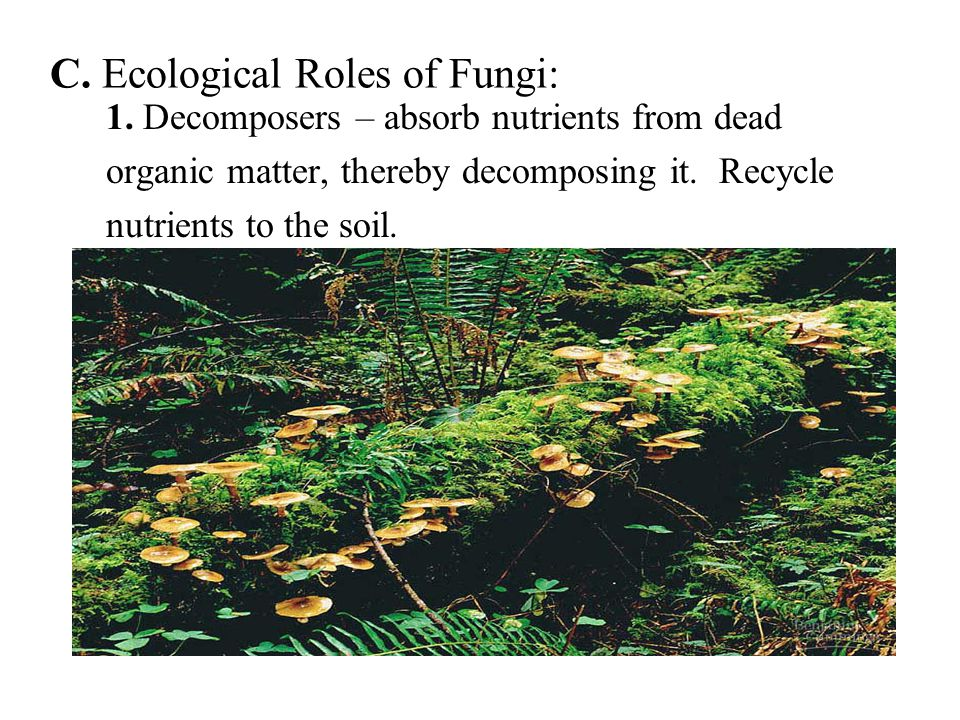 C. Ecological Roles of Fungi: