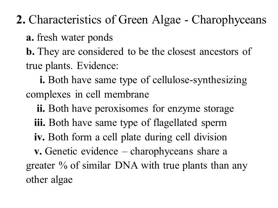 2. Characteristics of Green Algae - Charophyceans