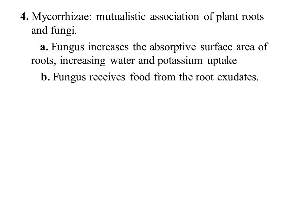 4. Mycorrhizae: mutualistic association of plant roots and fungi.