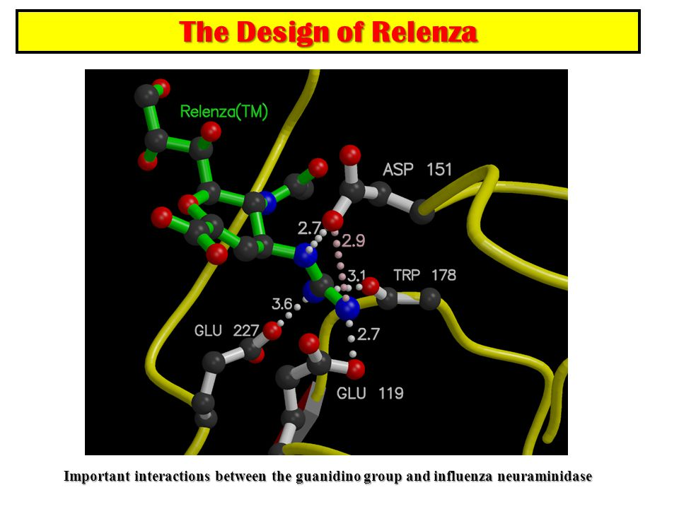 The Design of Relenza Important interactions between the guanidino group and influenza neuraminidase.