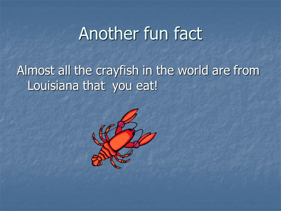 Another fun fact Almost all the crayfish in the world are from Louisiana that you eat!
