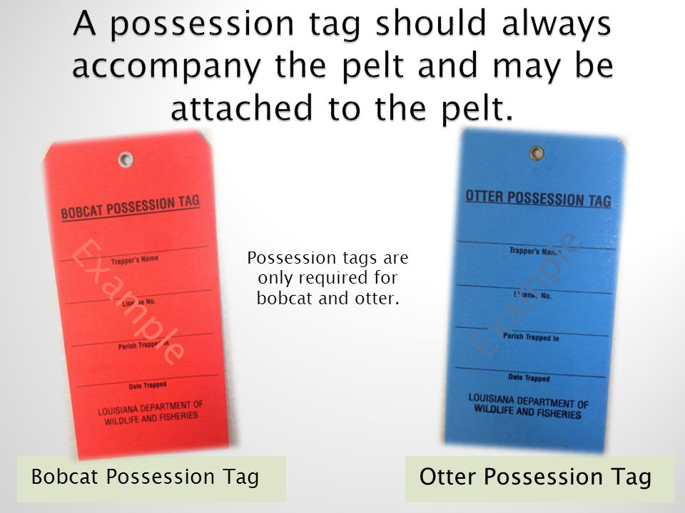 Possession tags are only required for bobcat and otter.