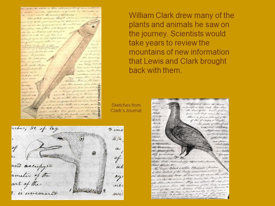 Sketches from Clark's Journal