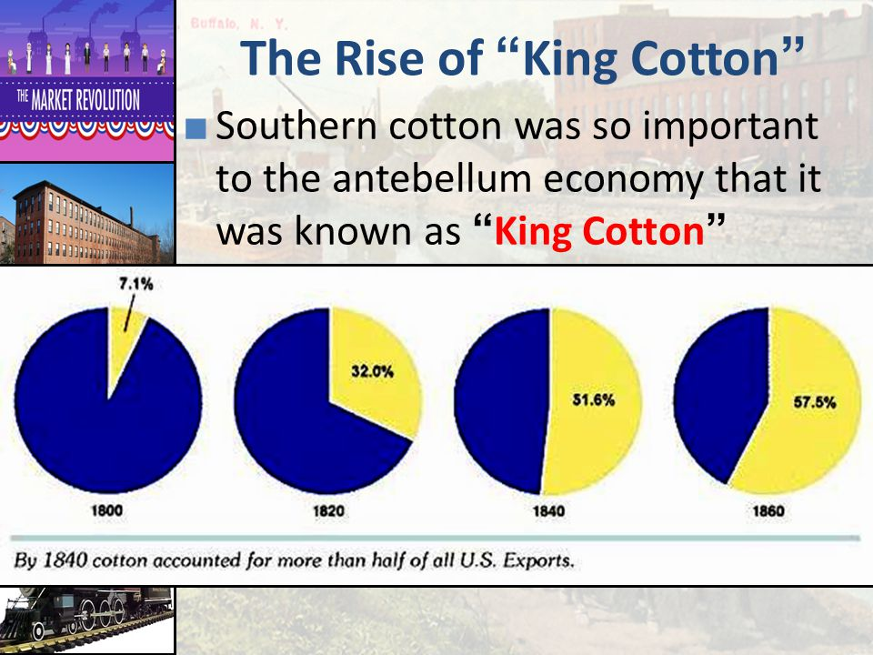 The Rise of King Cotton