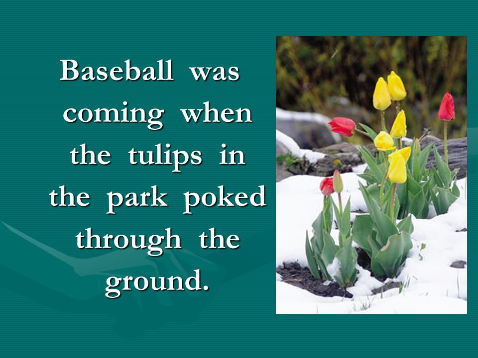 Baseball was coming when the tulips in the park poked through the ground.