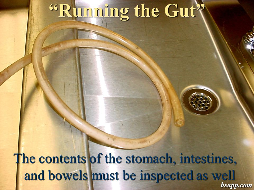 Running the Gut The contents of the stomach, intestines, and bowels must be inspected as well.