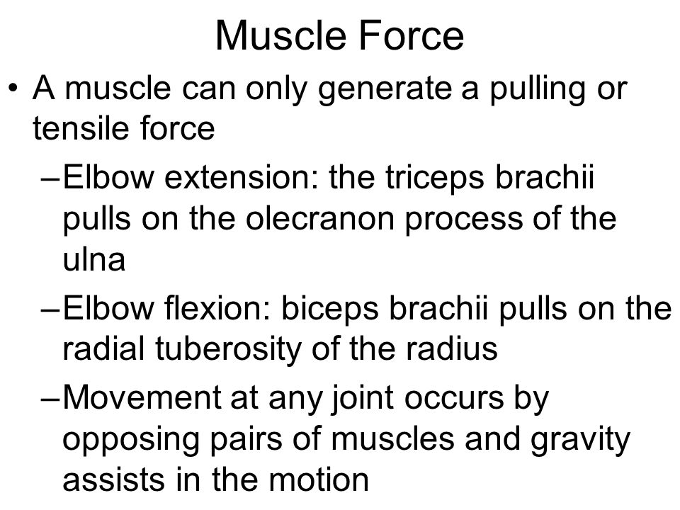 Muscle Force A muscle can only generate a pulling or tensile force